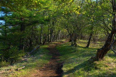 森林の散策小道