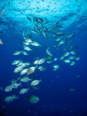海洋の生物