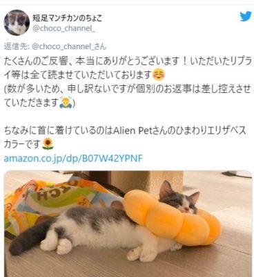 (@choco_channel_)twitter