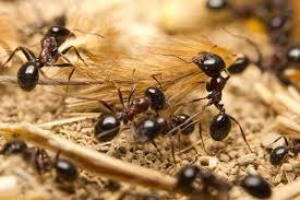 乳児を襲った蟻