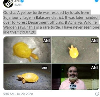 Odisha twitter