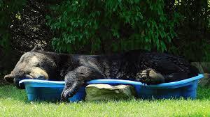 うたた寝したクマ