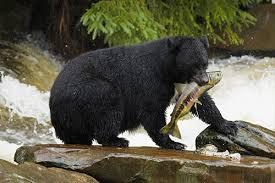 大きなクマ