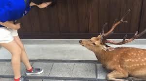 礼儀正しい鹿
