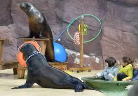 アシカの首にロープをつけ、子供が乗ったボートを引っ張らせる