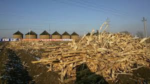 中国食糧危機