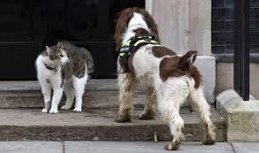 犬を防ぐラリー