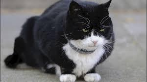 英外務省「守護ネコ」パーマストン