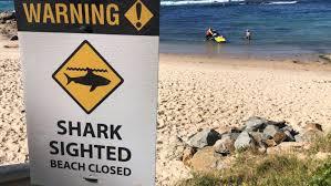 サメの注意看板