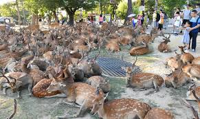 暑さを避ける鹿