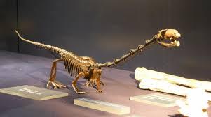 タニストロフェウスの骨格