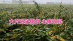 黒竜江省は大雨と台風の影響