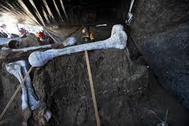 空港建設現場で200体のマンモスの骨格