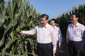 穀物畑を視察する習近平