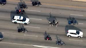 高速道路を馬で走る男