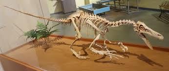 ハドロサウルスの骨格