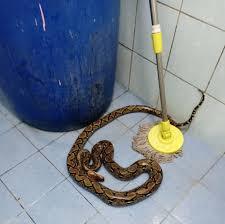トイレで噛みついた蛇