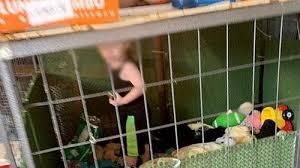 ヘビと一緒に檻の中に住んでいた子供