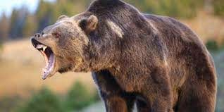上海のサファリパークの熊