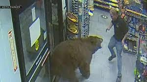 クマが来店