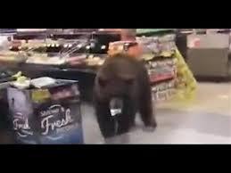 コンビニショップにクマが現れる映像!
