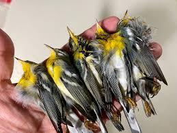 鳥が高層ビルに衝突