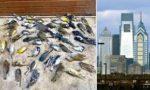 鳥が高層ビルに衝突か、推計1500羽死傷