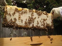 宇宙空間でのハチミツの不思議な状態