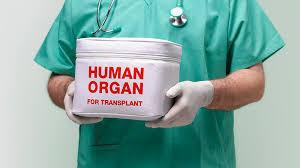移植用の心臓