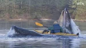 女性2人がカヤックごとクジラの口の中