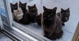 世話をしていた野良猫、 6匹の我が子を窓の外に並べてお披露目