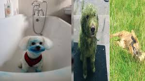 インクカートリッジのゴミで遊び青く染まった犬