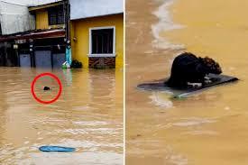 台風で浸水した街中の濁流を、木の板に乗り進むネズミ