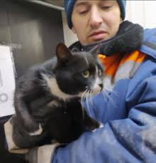 ゴミ処理場のベルトコンベアに流れてきた猫