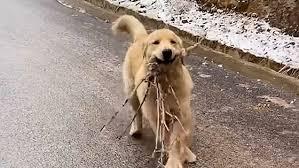 木の枝をくわえた犬ケーキが滑りながら飼い主に駆け寄る。