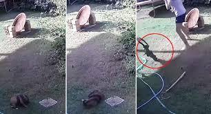 子犬を襲ったヘビにラッピングペーパーの筒で対抗
