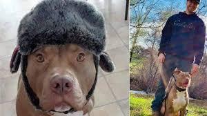 愛犬を救うため160キロの熊と闘った飼い主