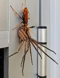 クモのシャーロット