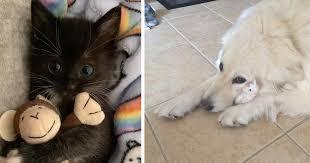 ぬいぐるみを離さない犬や猫たち