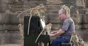 大勢のサルに囲まれてピアノのコンサートを開く男性
