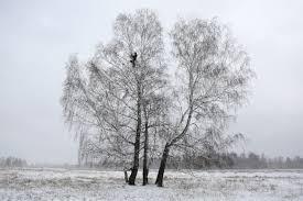 高さ8メートルの木の上でオンライン授業を受ける学生