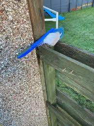 庭の青いオウムを保護しようとした父、その正体に気付き大爆笑
