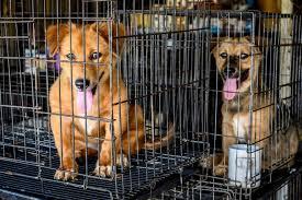 火災発生した動物保護シェルターでホームレスが16匹の犬猫を救出。