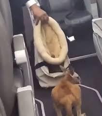 カンガルーハリーが機内で跳ねる