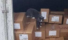 コンテナ内に閉じ込められ2500キロを移動した猫