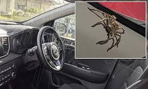 車内がまるでクモのパーティ会場。