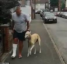 松葉杖の飼い主に同情する犬
