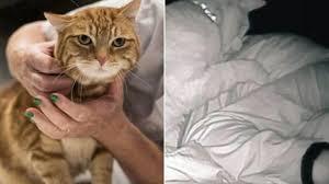 飼い主を夜中に叩き起こそうとする猫