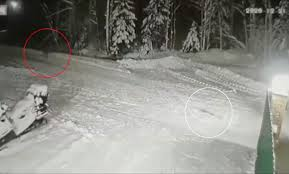 ロシアでオオカミから飼い主の息子を守った犬の動画