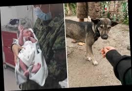 新生児が捨てられていることを伝えた犬
